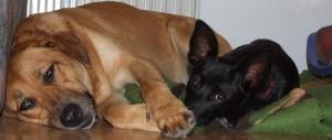 hundemuede1